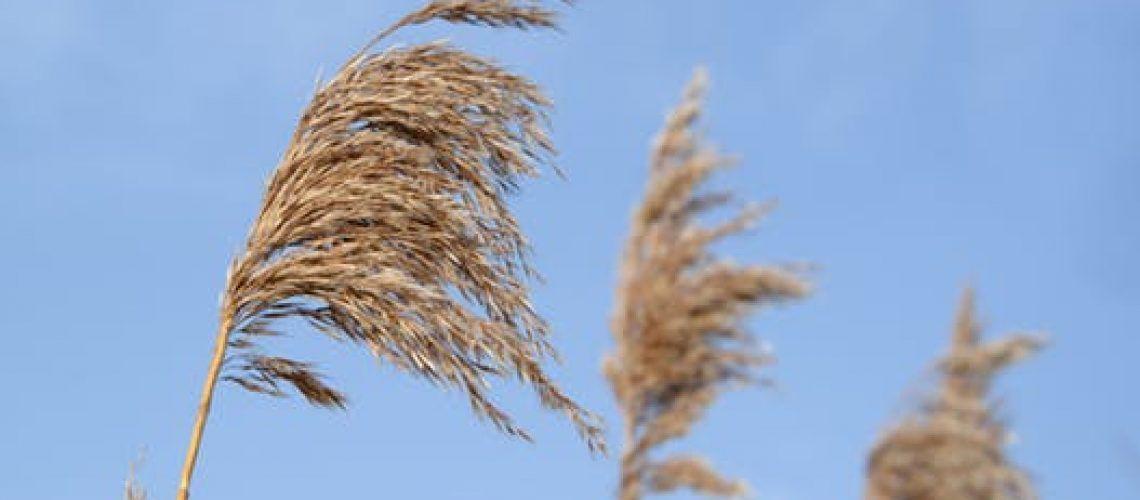 straw-nature-reed-natural-1019349